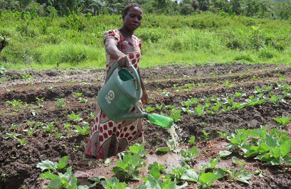 Appui De L´Oxfam Aux Populations à Bira Dans Le Domaine Des Cultures Maraichères. Photo Monges Samba, Oxfam RCA